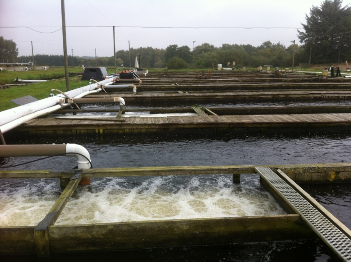 Recirculation trout farms in Denmark