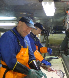 Fresh cod processing at Havfisk