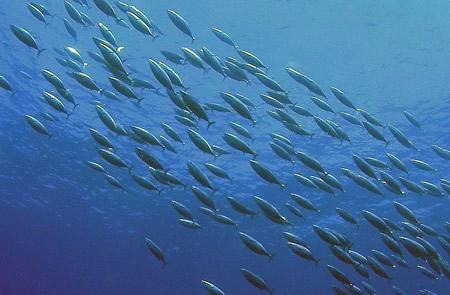 Испания: Галиция собрала 30 стран на Всемирной конференции по тунцу