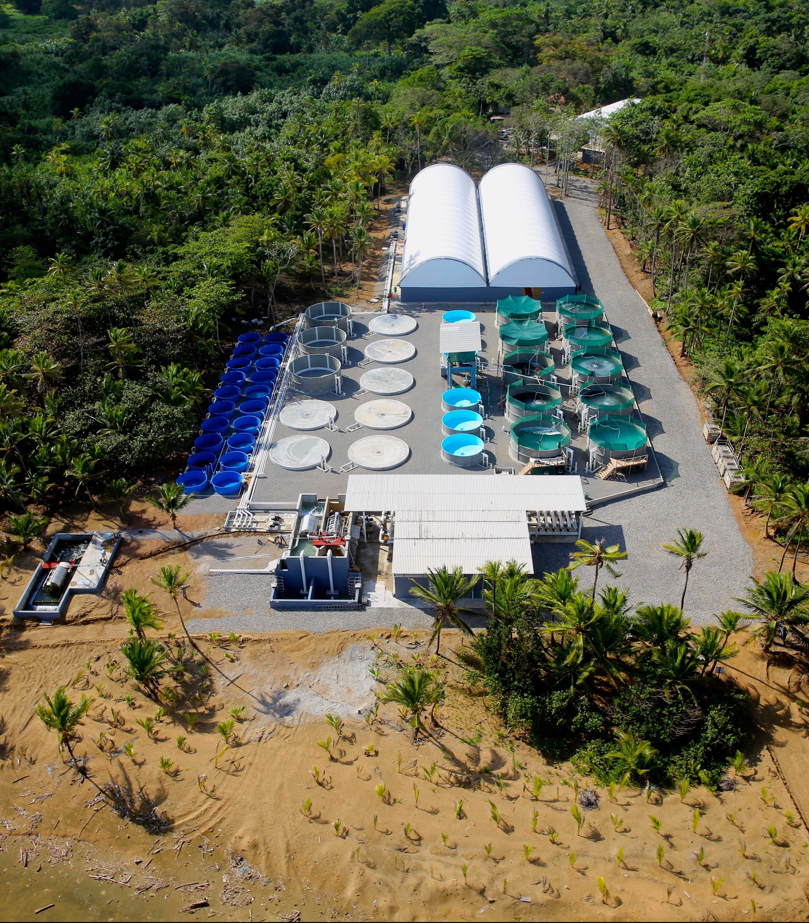 Cobia farmer open blue aims for asc certification by 2017 cobia firm open blue opens new plant huge hatchery 1betcityfo Gallery