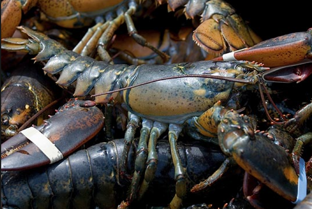 Early winter squalls delay Canada's biggest lobster ...