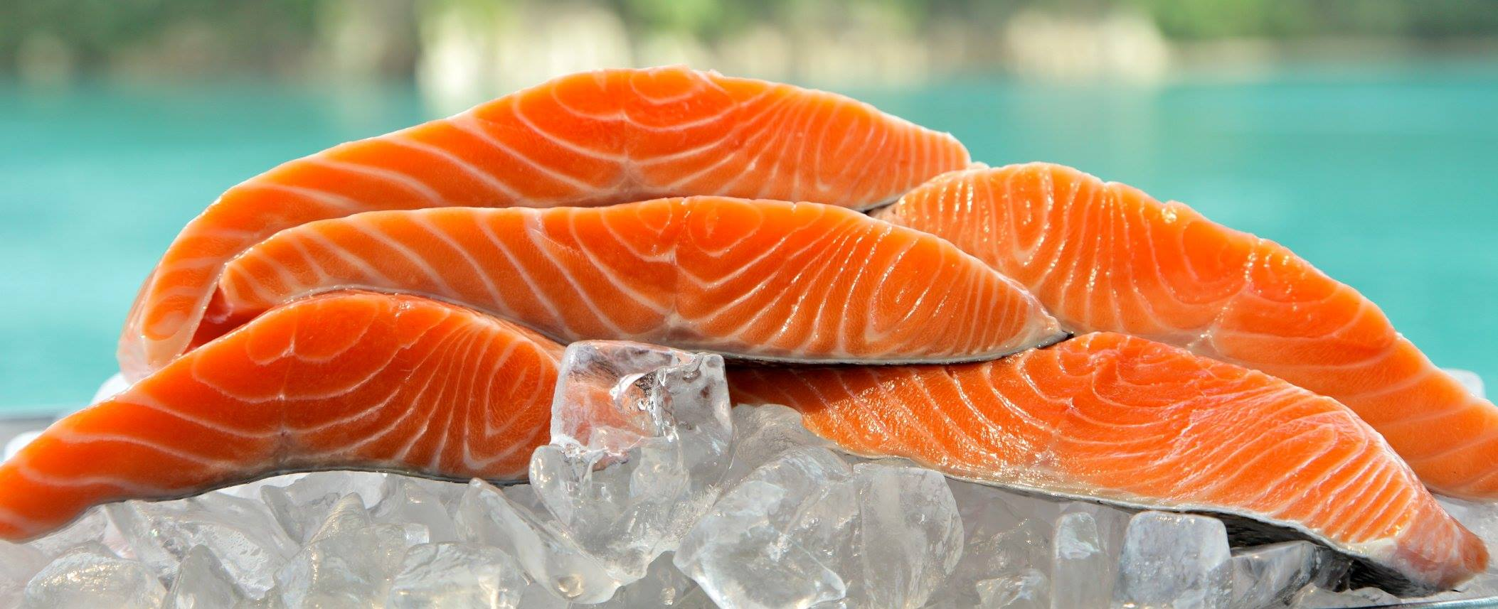 nz king salmon hires new coo from huon