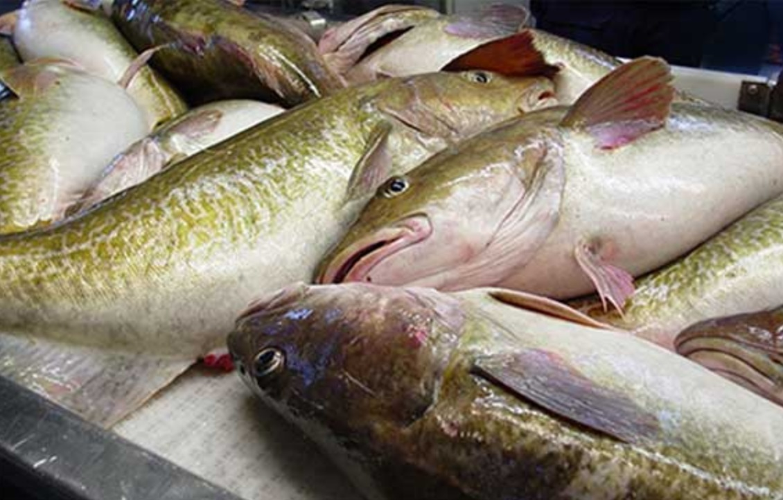 Major wild, farmed whitefish prices firm with 2018 supply ... - photo#23