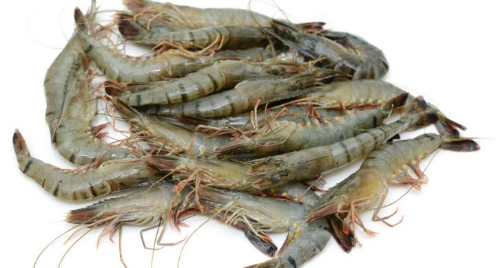 Facing mid-year slump, Bangladesh shrimp industry again